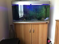 Large fish tank, stand and filter