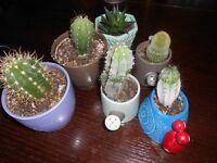 ^ healthy cacti plants