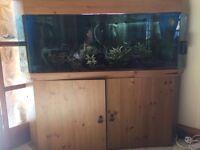 Corner fish tank aquarium