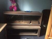 4 ft viv and bearded dragon