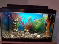 Complete tank including fish and extras