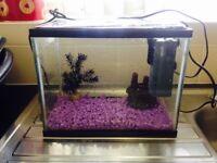 Fish tank with pump