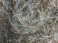 small bale hay (organic but without certification)