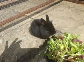 Cute tame baby rabbits for sale 🙂