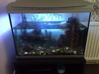 Fish tank and fish £60