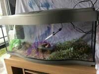 3ft curvy fish tank