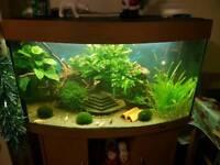 Fish tank Juwel Vision 180