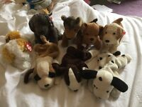TY BEANIE BABY DOGS
