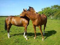 Horse DIY Livery