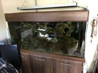 5ft Fishtank