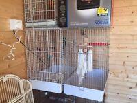 Bird Cages, & Pet Carriers, parrot/bird food, toys.