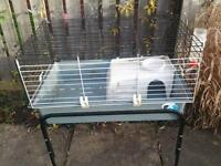 indoor/outdoor guinea pig/rabbit hutch