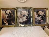 3 x bulldog paintings canvass