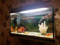 Fish tank stand and 6 fishes
