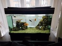 300l Aqua one aquarium