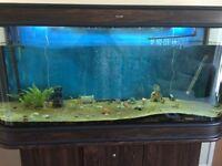 5' aquarium and stand