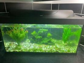 Fish tank setup with 7 fish
