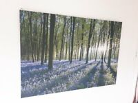 Large Canvas Print in the woods