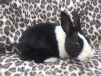 Last baby rabbit
