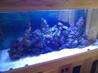 Live aquarium rock