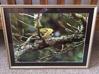 Gallery Framed Photograph for bird watchers!