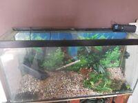 3.5 ft fish tank