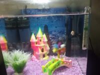 Fish tank and fishes