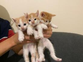 3 Beautiful and Cute special kittens for sale.