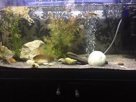 90ltr aquarium and stand