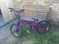 Purple Diamond Back BMX.