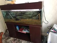 4 foot wide x 22inch high x 15 inch back to front fish tank