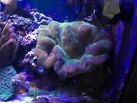 Soft coral finger coral marine fish tank