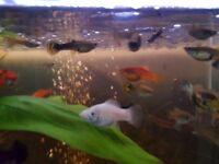 10 mix tropical fish