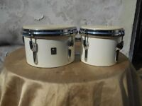 Premier bongo drums