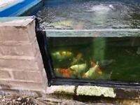 Koi pond closure
