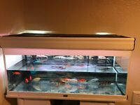 Fish tank and fishes for sale