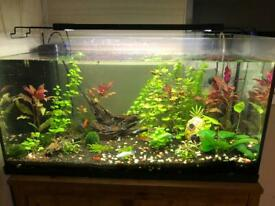Fish tank set up with fish