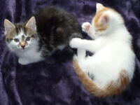 Fully trained kittens waiting for new home
