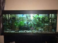 Fish tank 240l - Now reduced