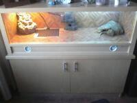 bearded dragon with viv and stand and all acces