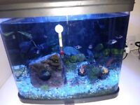 """River reef 48L fish tank with/without fish and shrimps, Harrow"""""""