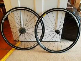 DT swiss 700 x 23c wheel set