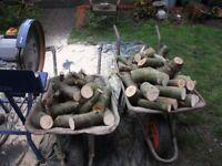 Freshly cut logs meadem size