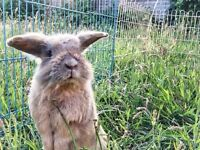 Cute little rabbit for sale (including 5kg food, hay,litter, water bottle and a big hutch)