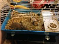 2 X rabbits and large indoor cage