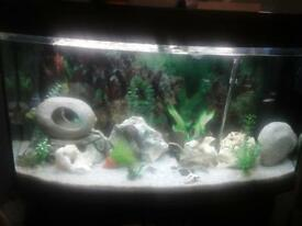 AQUARIUM 3FT BOWFRONT WITH MATCHING CABINET REDUCED! !!!!!
