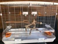 Lovely large vision bird cage