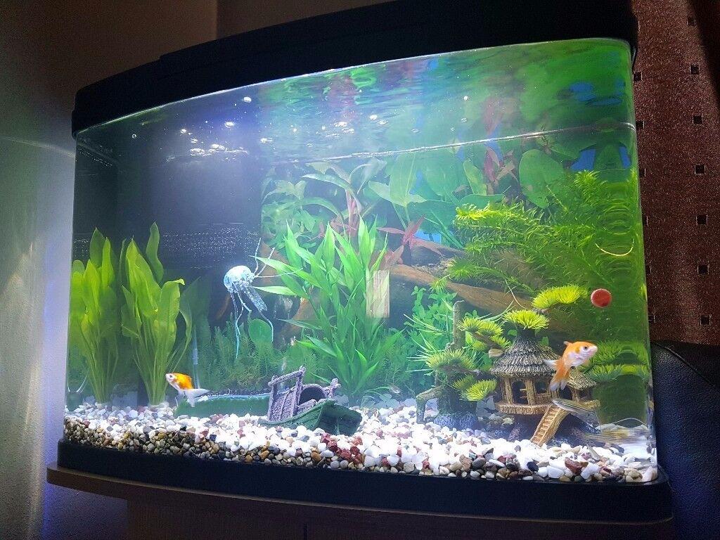 fluval vue aquarienset prima. Black Bedroom Furniture Sets. Home Design Ideas