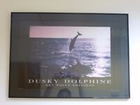 'Dusky Dolphine' Black lacquered metal framed Print (70cm x 50cm)