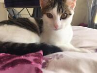 7 month old kitten needs a lovely new home!